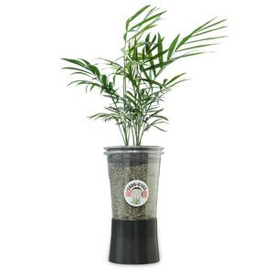 컵플랜트 공기정화식물 테이블야자